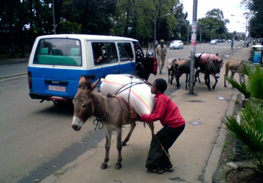 Traditionella lastdjur är ingen ovanlig syn i Etiopiens huvudstad Addis Abeba.