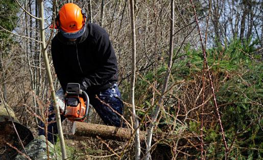 Ensamarbete i skogen gör att det kan bli svårt att få hjälp vid en olycka. Foto: Hasse Holmberg