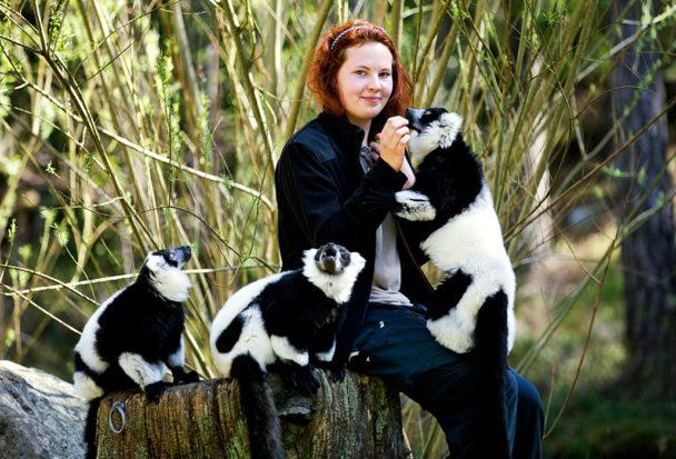 Apskötaren Emilia Hildén matar lemurerna Bill (den dominanta), James (kelgrisen) och Fredrik (den skygga) och passar på att gosa med dem.Foto: Stefan Jerrevång