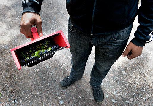 Plockmaskin eller pappersmugg – det är skillnad anser de bulgariska bärplockarna som vägrade tigga. Foto: Pontus Lundahl