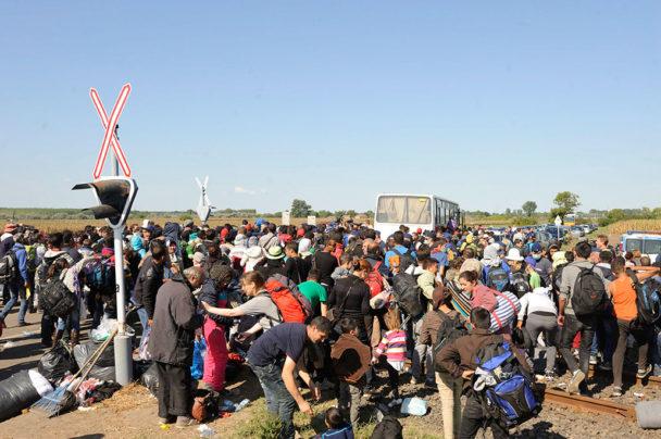 Flyktingar anländer till en uppsamlingsplats nära den ungerska byn Roszke vid gränsen till Serbien. Foto: Zoltan Gergely Kelemen
