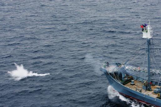 SOUTHERN OCEAN 20051221  Bilder pett japanskt fartyg som harpunerar vikval i  Southern Ocean Whale Sanctuary mellan Antarktis och Tasmanien. Bilderna ‰r tagna frÂn Greenpeace fartyg MY Esperanza, som ocksfˆrsˆkte blockera v‰gen fˆr de japanska valfÂngsfartygen. --- Greenpeace ship MY Esperanza witness the killing of whales in the Southern Ocean by the Kyo Maru No.1 ships of the Japanese whaling fleet, and the transfer of the whales to the Nisshin Maru factory ship. Southern Ocean.  Foto Jeremy Sutton-Hibbert / Greenpeace / SCANPIX code 20360