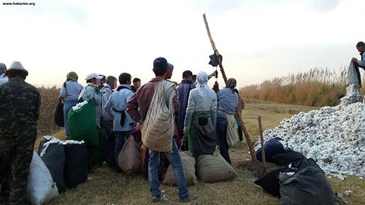 H&M m fl har köpt kläder från ett företag i Turkmenistan, vars bomull skördas med tvångsarbete. Foto: habartm.org / Handout / TT /