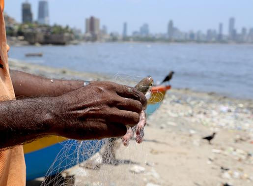 Fisket i Mahim-bukten har påverkats.
